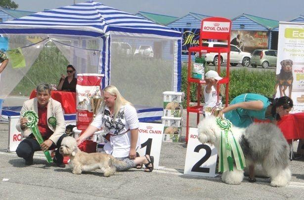 Победитель BIS выставки собак «Фаворит-2014» в г.Находке Денди динмонт терьер Чупа!